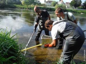 Pêche ammocètes sur la Vienne