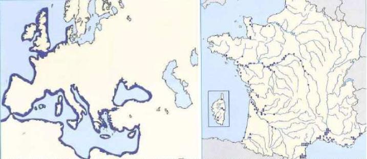 Aire de répartition du mulet porc, Atlas des poissons d'eau douce.