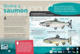 Panneau truite-saumon adultes