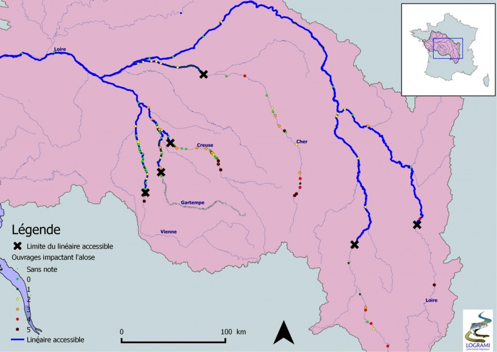Linéaire accessible pour l'alose dans le bassin de la Loire (Source : ONEMA, 2014 – Réalisation : LOGRAMI, 2014)