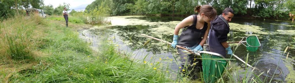 Recherche des anguillettes dans un bras mort de la Loire