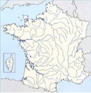 Aire de répartition du flet commun en France (Atlas des poissons d'eau douce)